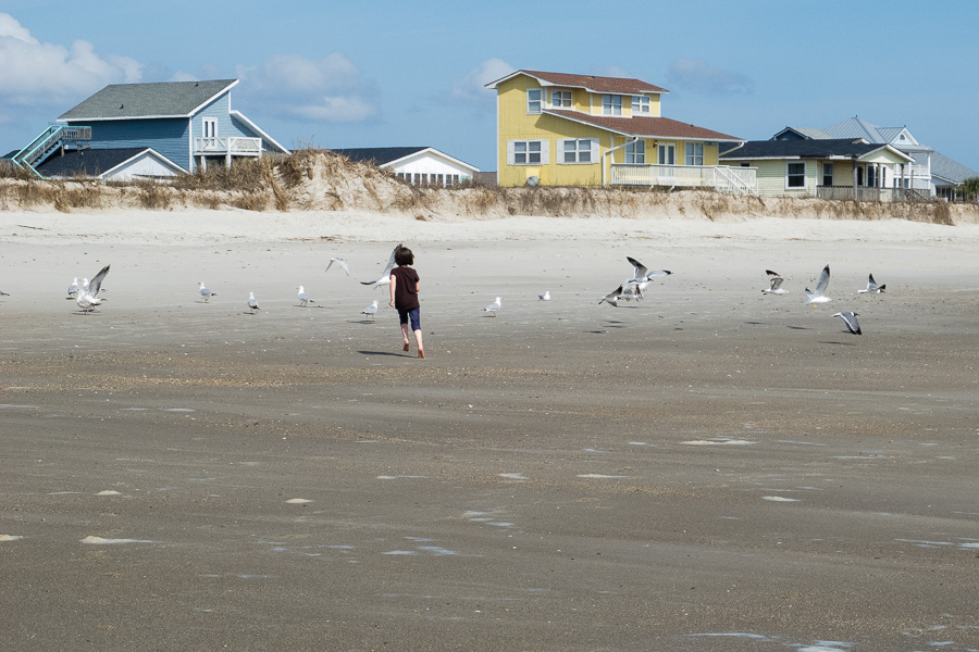 chasing seagulls at the beach