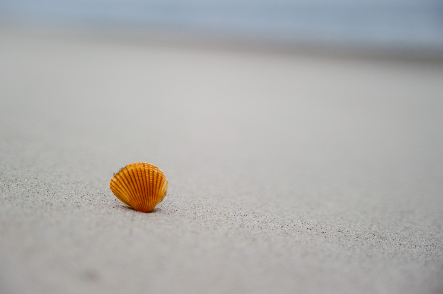 Sunrise Shell