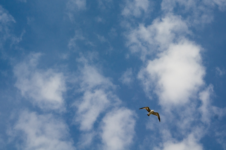 Birdie in the Sky