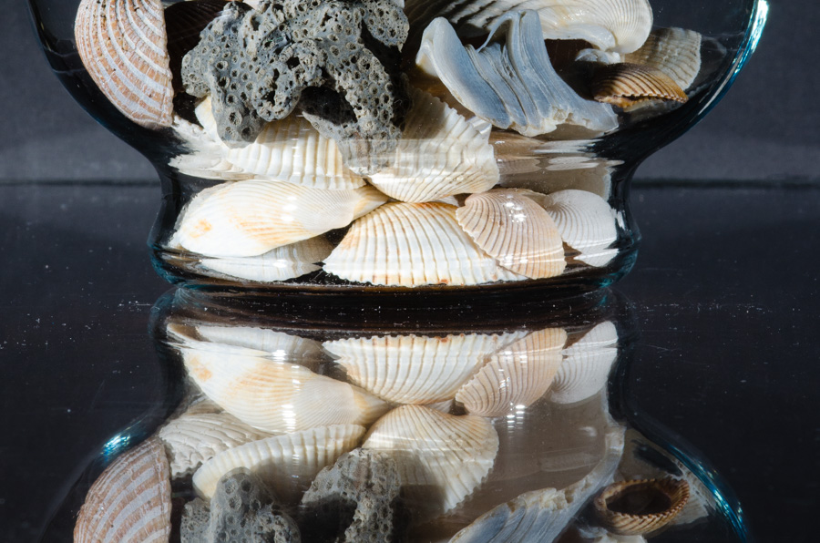 Shell Reflections