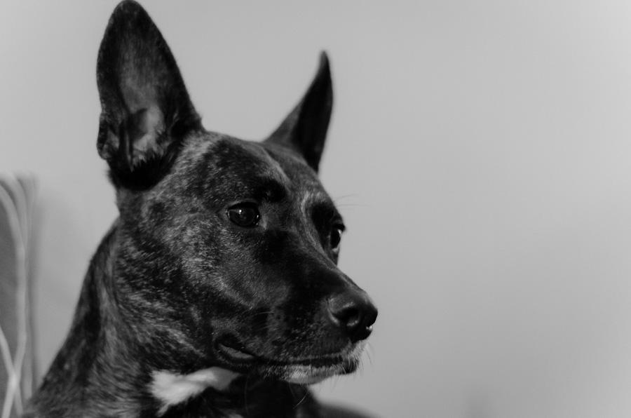 Piper the Bat Dog
