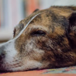 Day 242 Project 366 – Sleeping Dog Lie