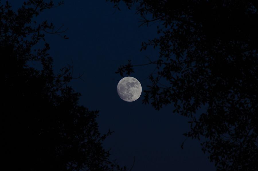 Moon Rising through the Oaks