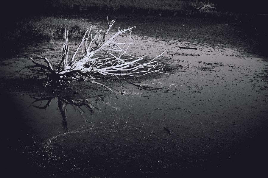 Driftwood in the marsh