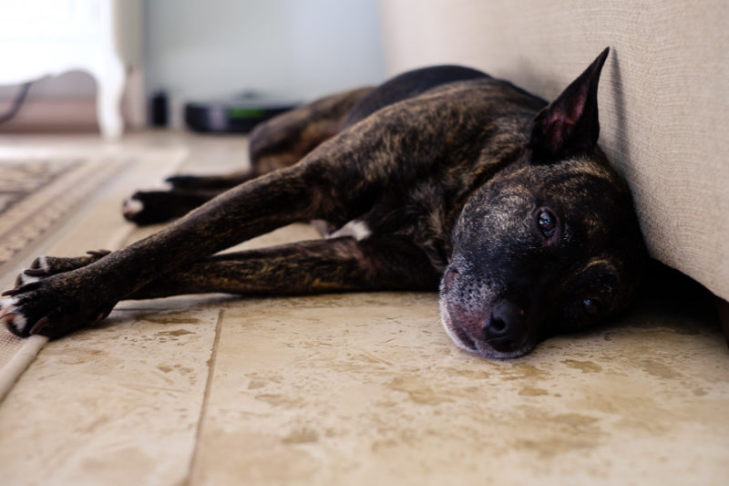 Black dog laying on a tile floor to cool off